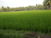 Agricultural land for sale in Sangareddy