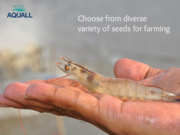 Buy Aquaculture seeds online at lowest prices in India - Aquall