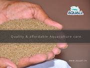 Get Aquaculture feeds online from best sellers in India – Aquall
