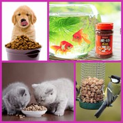 Pet Accessories Online - Low Prices on Popular Products,  india