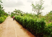 Farm Lands 1 Acre