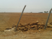 Green Acres Agriculture land and plots near shamshabad, hyderabad