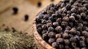 Black Pepper Suppliers in India - Alram Exports