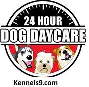 Kennels9 Offering Dog Boarding Services