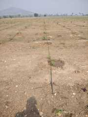 Sandalwood plantation plots for sale at Narkatpally
